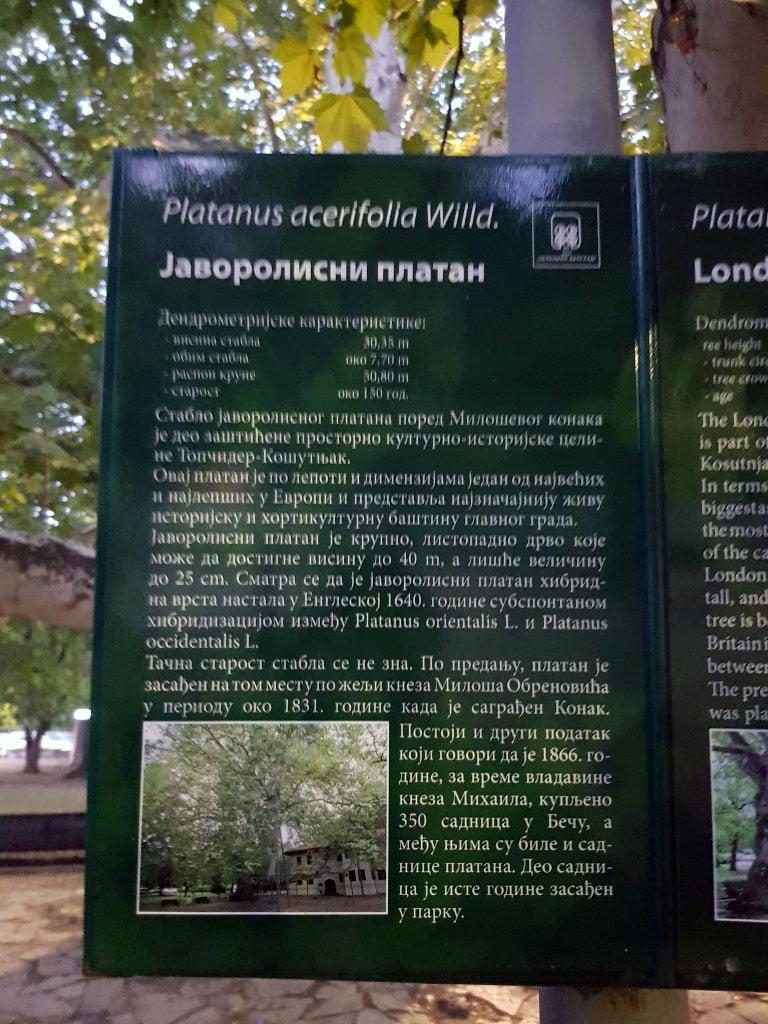 Srbija_Beogard_Veliki_platan_Topciderski_park_akcija_povoljno